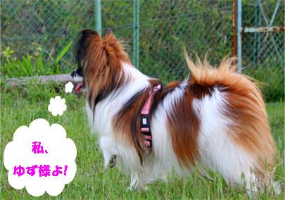yuzu070516-1.jpg