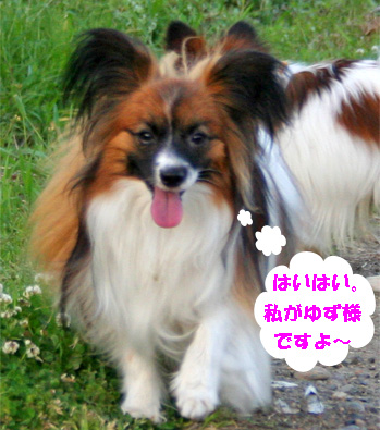 yuzu070516-2.jpg