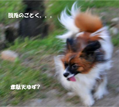 yuzu070516-3.jpg