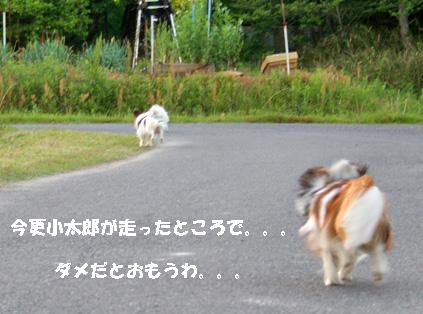 yuzu070516-4.jpg