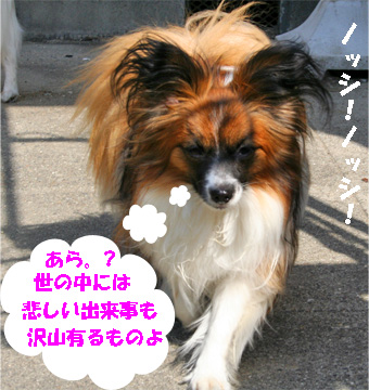 yuzu070518-1.jpg