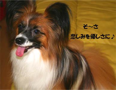 yuzu070528-1.jpg