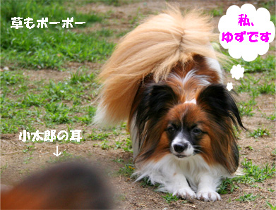 yuzu070529-1.jpg