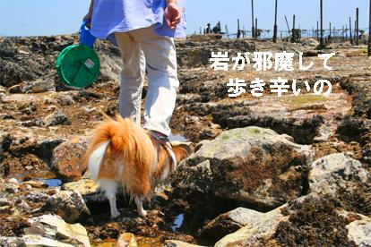 yuzu070604-1.jpg