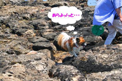 yuzu070608-1.jpg