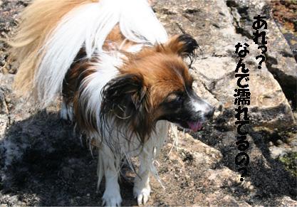 yuzu070608-2.jpg