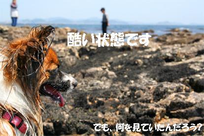 yuzu070608-4.jpg