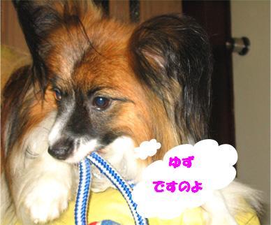 yuzu070703-1.jpg