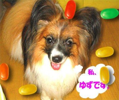 yuzu070704-1.jpg