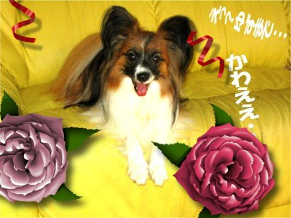 yuzu070705-2.jpg