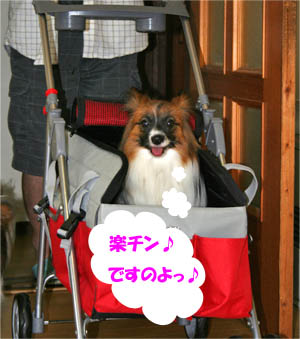 yuzu070706-2.jpg