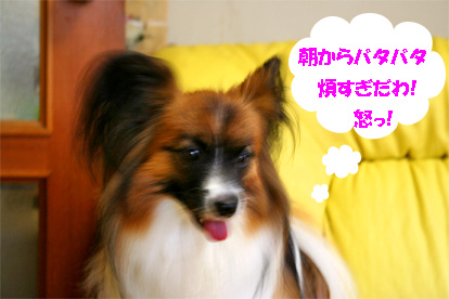yuzu070710-2.jpg