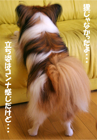 yuzu070711-6.jpg