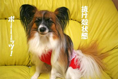 yuzu070712-1.jpg