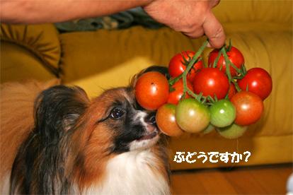 yuzu070712-4.jpg