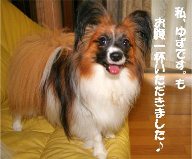 yuzu070713-1.jpg