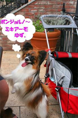 yuzu070716-1.jpg