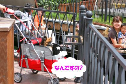 yuzu070717-1.jpg
