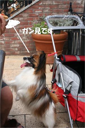 yuzu070717-2.jpg