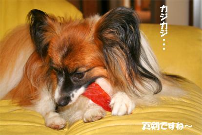 yuzu070719-1.jpg