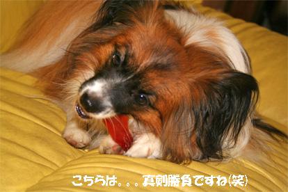 yuzu070719-2.jpg