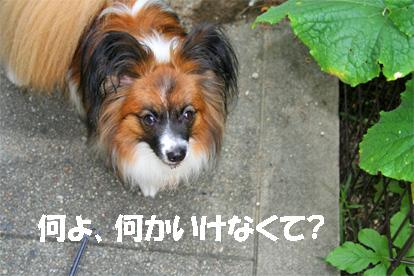 yuzu070720-1.jpg