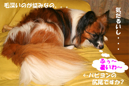 yuzu070728-1.jpg