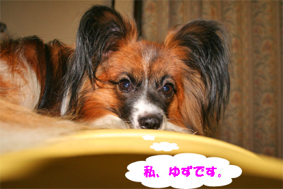yuzu070728-2.jpg