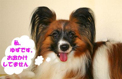 yuzu070803-1.jpg