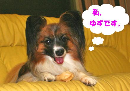 yuzu070807-1.jpg