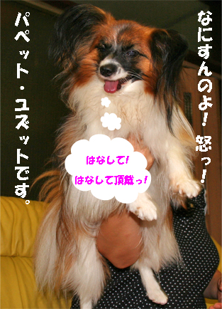 yuzu070807-2.jpg