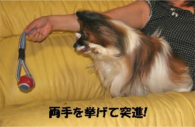 yuzu070807-3.jpg