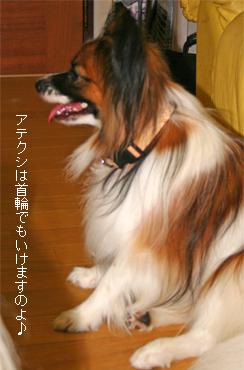 yuzu070809-1.jpg