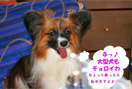 yuzu070817-1.jpg