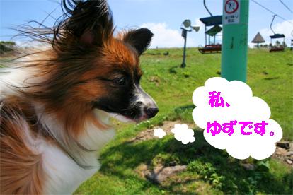yuzu070820-1.jpg