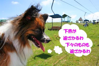 yuzu070820-2.jpg