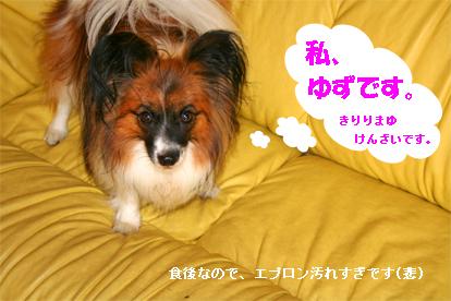 yuzu070827-1.jpg