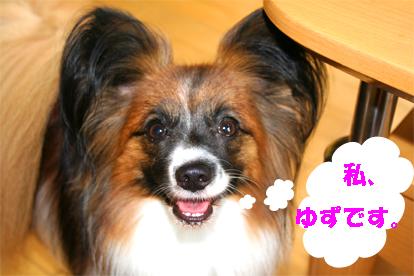 yuzu070829-1.jpg