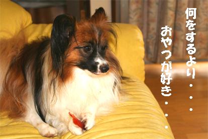 yuzu070829-2.jpg