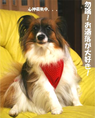 yuzu070829-4.jpg