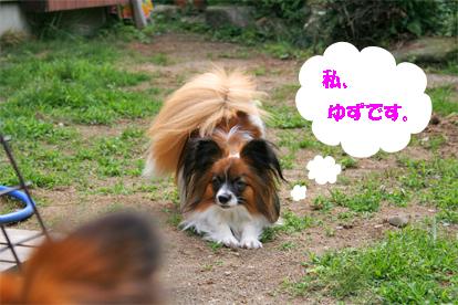 yuzu070831-1.jpg