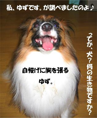 yuzu070831-2.jpg