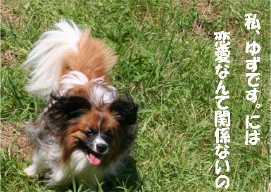 yuzu070831-4.jpg