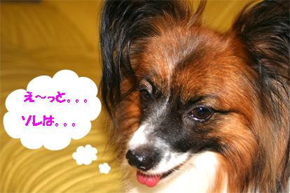yuzu070831-5.jpg