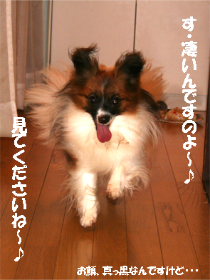 yuzu070904-1.jpg