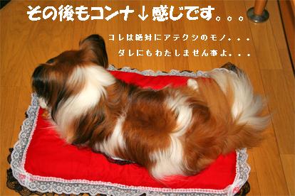 yuzu070904-4.jpg