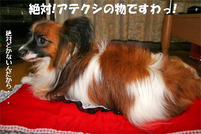 yuzu070904-5.jpg