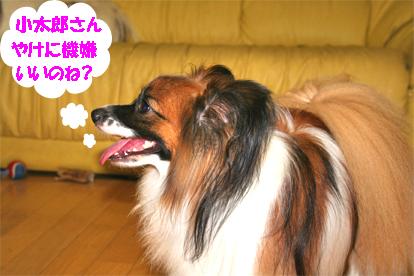 yuzu070905-1.jpg