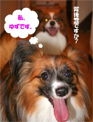 yuzu070906-1.jpg