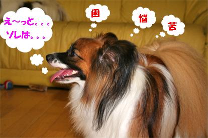 yuzu070906-2.jpg